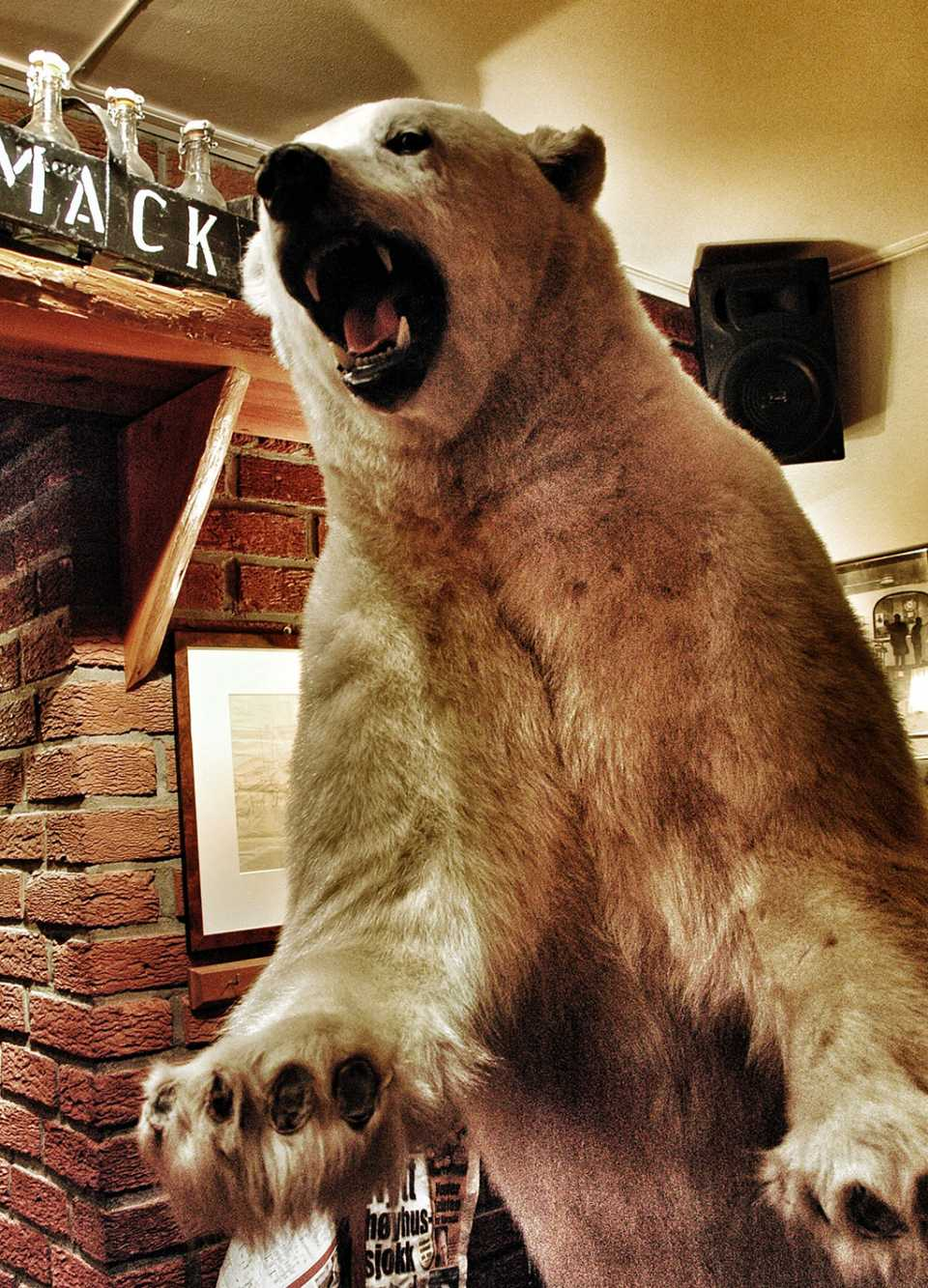 A polar bear greets you at Mack's Brewery. Better here than at the golf course.