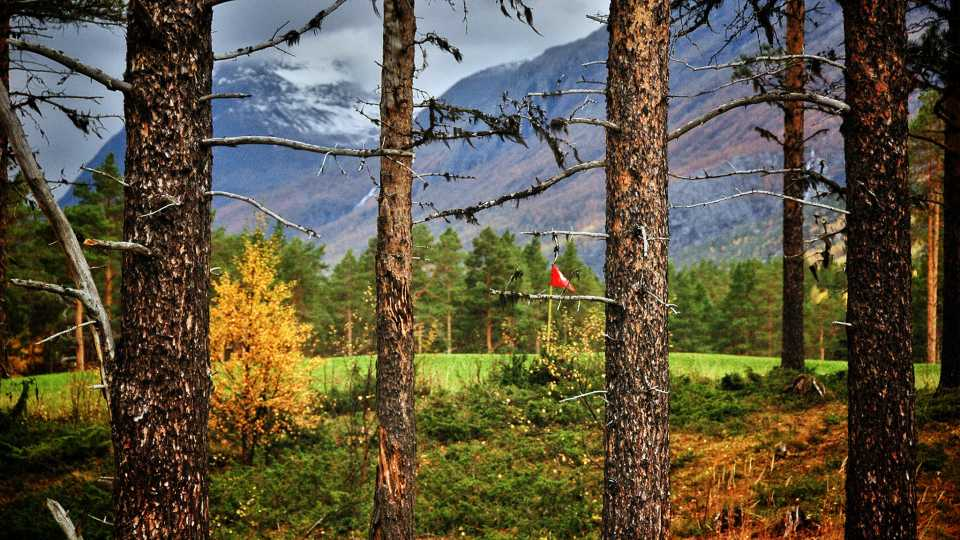 Pine trees are seemingly always in play at Skjomen Golfpark.