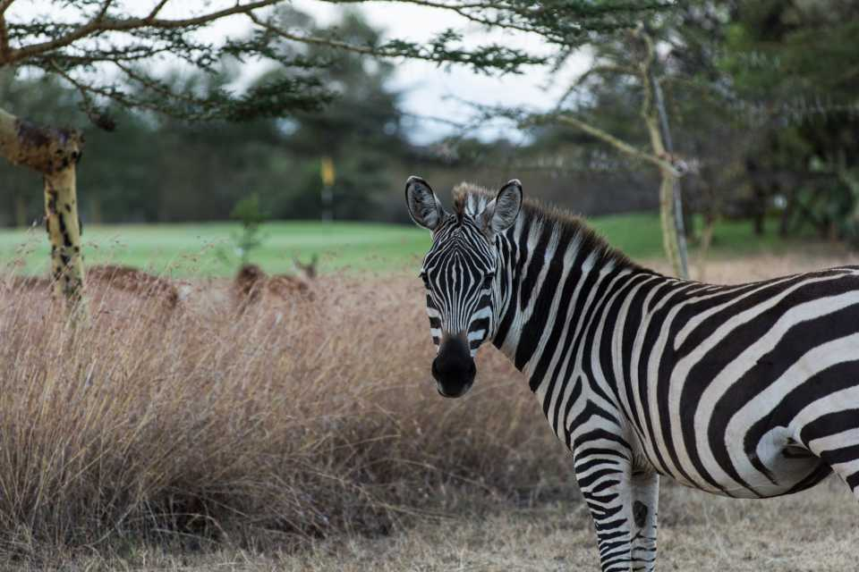 As the zebras got used to me following them around, they got pretty relaxed about my presence.